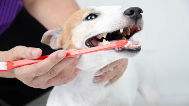 dog dental hygiene tips from all care veterinary hospital in coppell texas